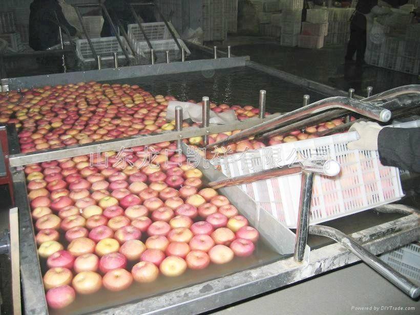 تولید کنسانتره سیب