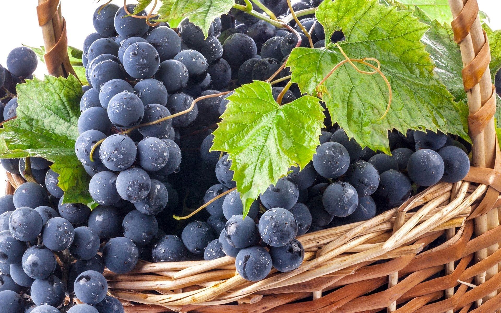 قیمت کنسانتره انگور سیاه
